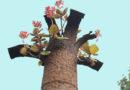 Quảng Trị dự định tổ chức festival quốc tế 'Vì hòa bình'